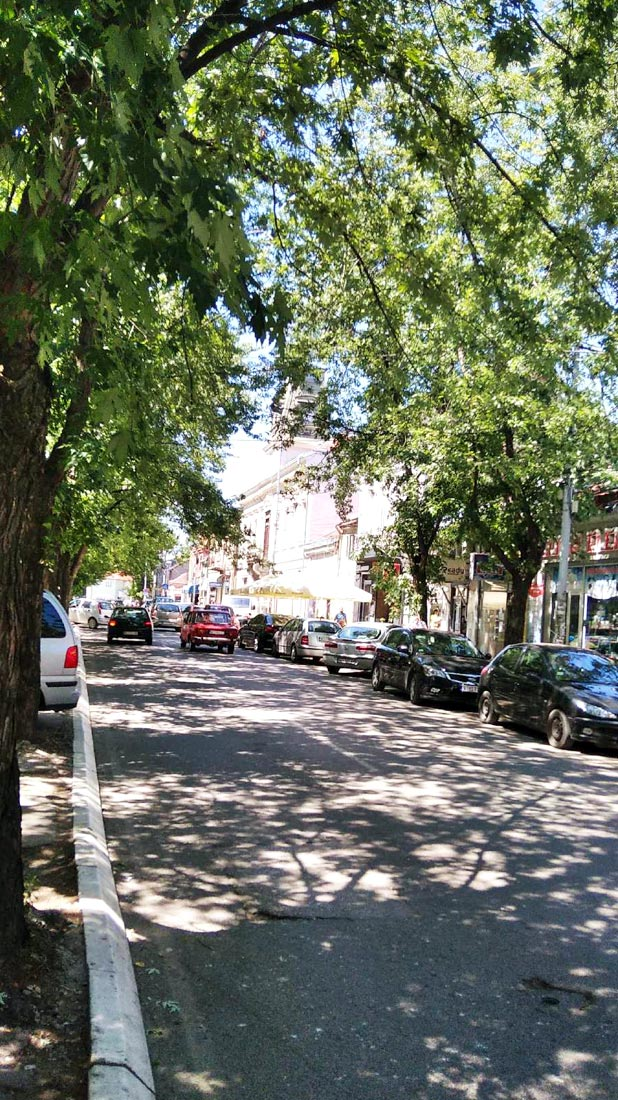 Drvored u ulici