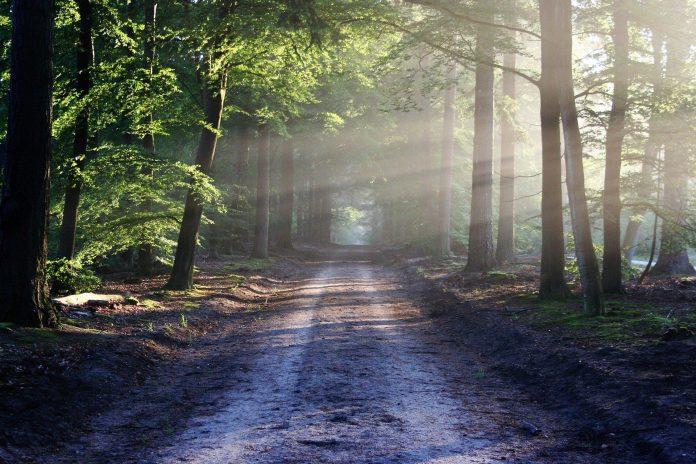 Šuma je proizvođać kiseonika